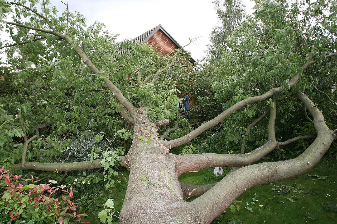 Trees can cause huge damage to properties if they fall